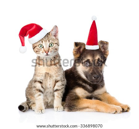 dog and cat in red christmas hats looking at camera. isolated on white background - stock photo