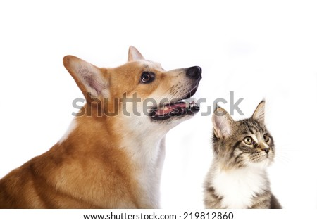 dog and cat is looking up, portrait in profile - stock photo