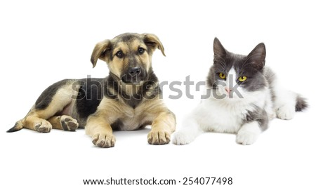 Dog and cat looking - stock photo