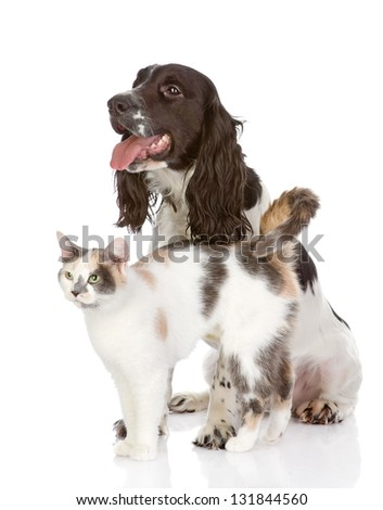 dog and cat. looking away. isolated on white background