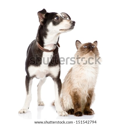 Dog and cat looking up. focused on the cat. isolated on white background - stock photo