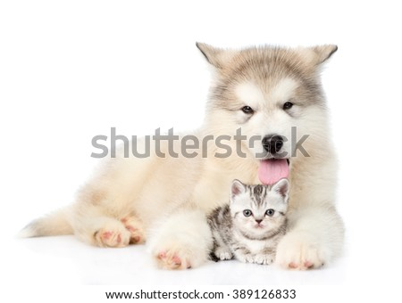 Dog and cat lying together. isolated on white background