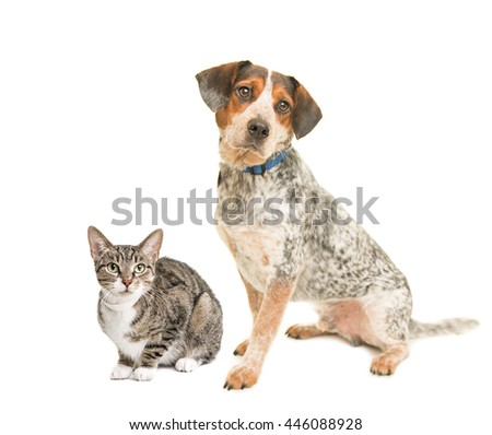 dog and cat over white