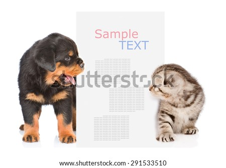 Dog and cat peeks out from behind the billboard and looking at text. isolated on white background - stock photo