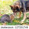Dog and cat playing together outdoor - stock photo