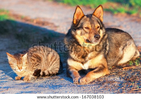 Dog and cat relaxing together outdoor at sunset