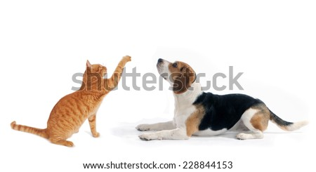 dog and cat side portraits sit and lying down  looking up, on white isolated background