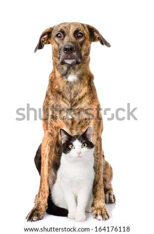 Dog and cat sitting in front. isolated on white background - stock photo