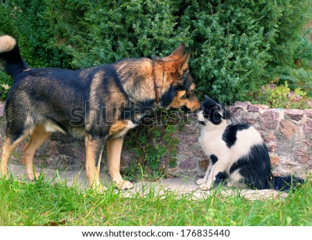 Dog and cat sniffing each other, - stock photo