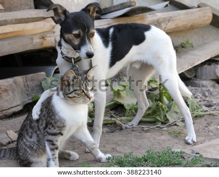Dog and cat together - stock photo
