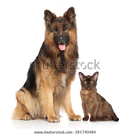 Dog and Cat together in front of white background - stock photo