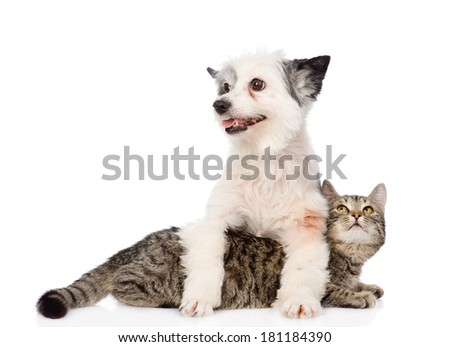 dog and cat together. isolated on white background - stock photo