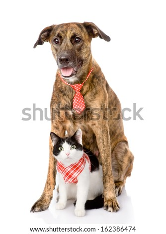dog and cat together. looking at camera. isolated on white background