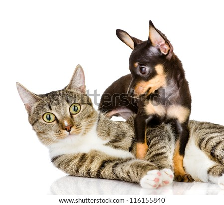dog and cat together. the puppy looks at a cat. isolated on white background - stock photo