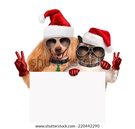 Dog and cat with peace fingers in red Christmas hats - stock photo