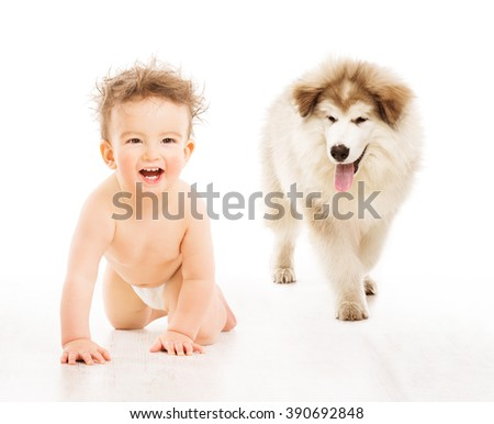 Dog and Child over White, Crawling Infant Baby with Kid Pet Friendship - stock photo