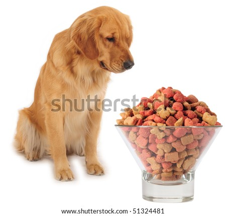 Dog and food. - stock photo