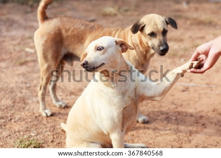 Dog and hand - stock photo