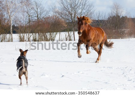 Dog and horse playing together in a pasture