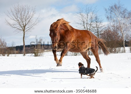 Dog and horse playing together in winter pasture - stock photo