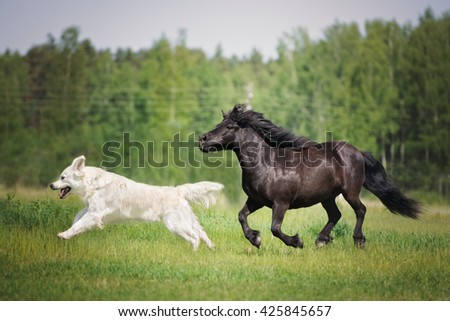 dog and horse running together on a field