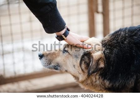 dog and human - stock photo