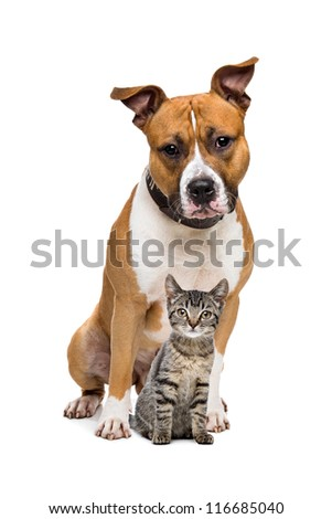 Dog and Kitten in front of a white background - stock photo