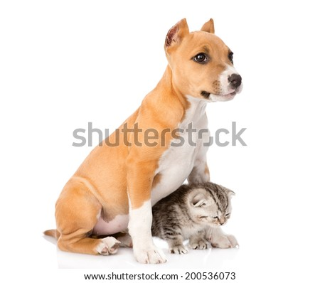 dog and little cat sitting together. isolated on white background