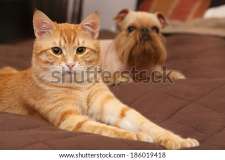 Dog and orange kitten sleeping together on the bed - stock photo