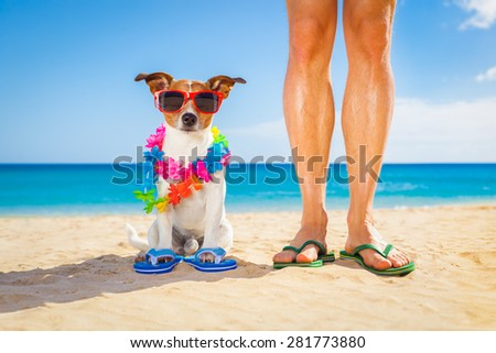 dog and owner sitting close together at the beach on summer vacation holidays, close to the ocean shore - stock photo