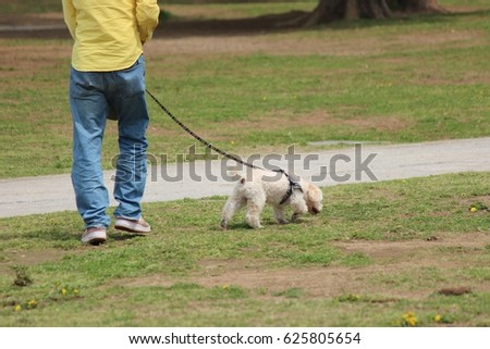 dog and owner walk