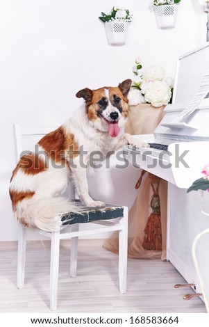 Dog and piano. Dog and musical instrument. Music and animal. - stock photo