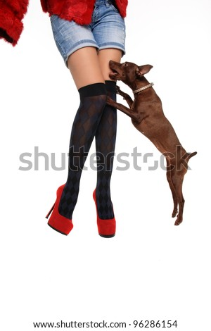 dog and red shoes isolated on a white background - stock photo