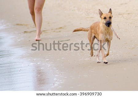dog and sea - stock photo