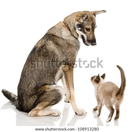 Dog and siamese kitten. isolated on white background - stock photo