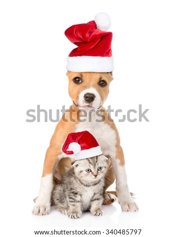 dog and small cat in red christmas hats sitting together. isolated on white background
