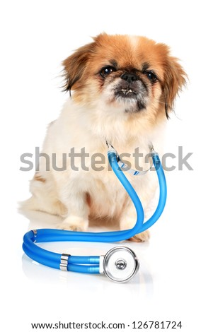 Dog and stethoscope isolated over white background. - stock photo