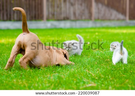 Dog and two kittens playing together outdoor