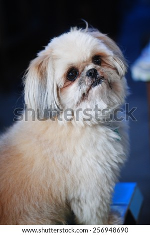 Dog animal background wallpaper one sitting stock photo 256948690 dog animal background wallpaper one sitting pets beauty cute puppy wall floor voltagebd Image collections