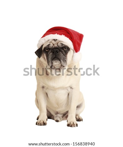 dog as a Christmas gift, exempted, white background, dressed as santa claus, cutout - stock photo