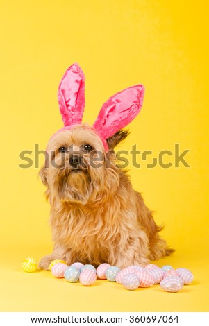 Dog as easter hare with eggs on yellow background - stock photo