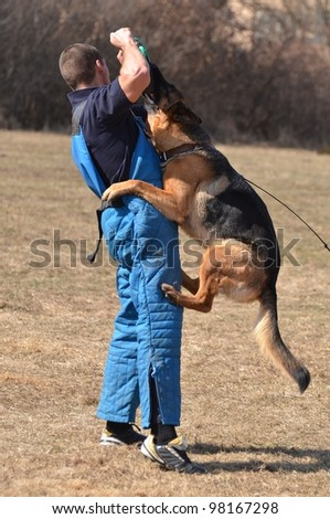 dog at a dog training center - stock photo