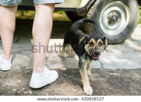 Dog at legs of the person. The car stands nearby.