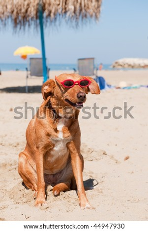 Dog at the beach