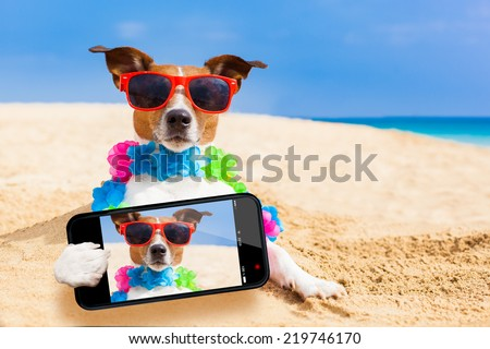 dog at the beach with a flower chain at the ocean shore wearing sunglasses taking a selfie - stock photo