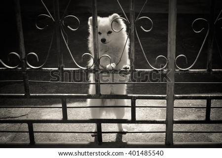 dog at the fence