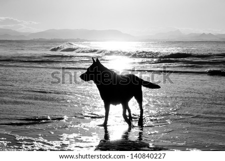 Dog at the sea in backlight