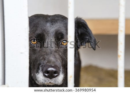 dog at the shelter.