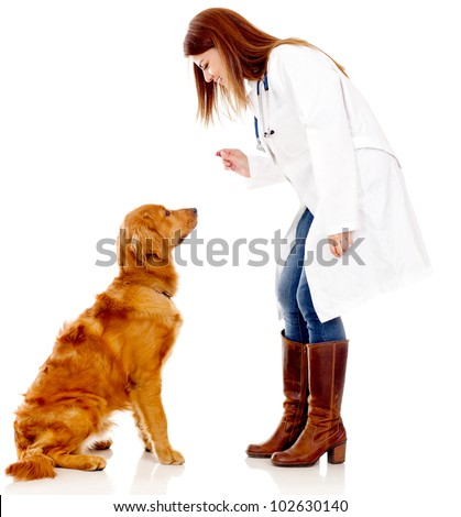 Dog at the vet - isolated over a white background - stock photo