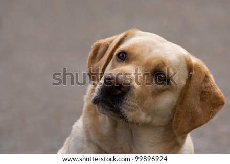 Dog attentively looks to the left on street - stock photo